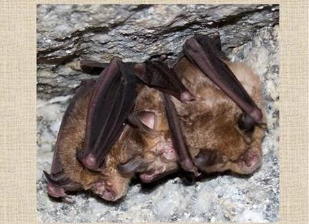 Charla sobre o morcego de ferradura e a paisaxe