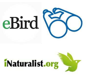 naturalista dixital 2