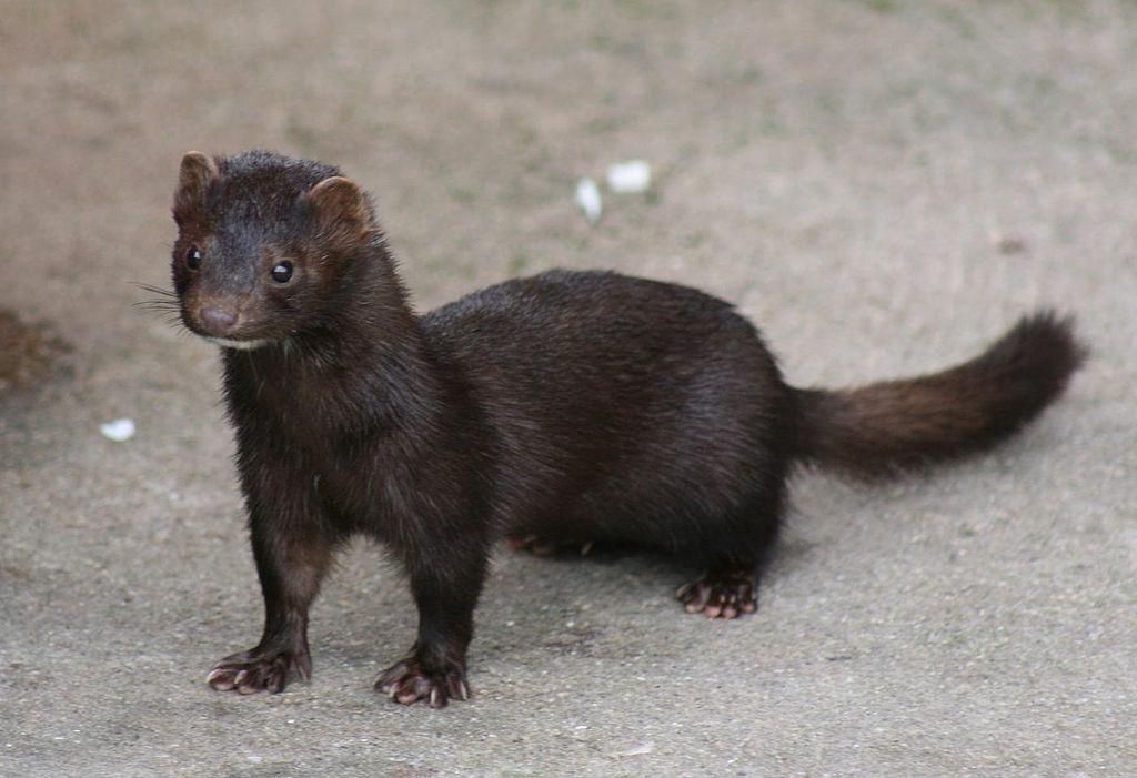 Charla informativa sobre a problemática e xestión de especies invasoras