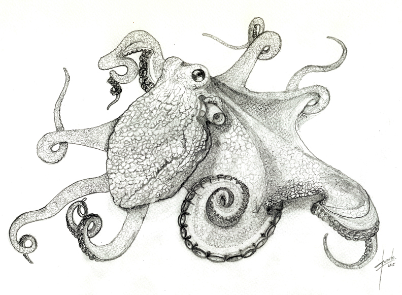 Octopus' life! por Ecoloxía Azul