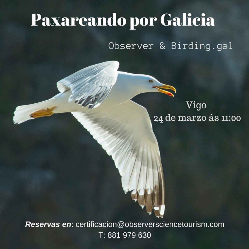 Paxareando por Galicia con Observer & Birding.gal en Pontevedra