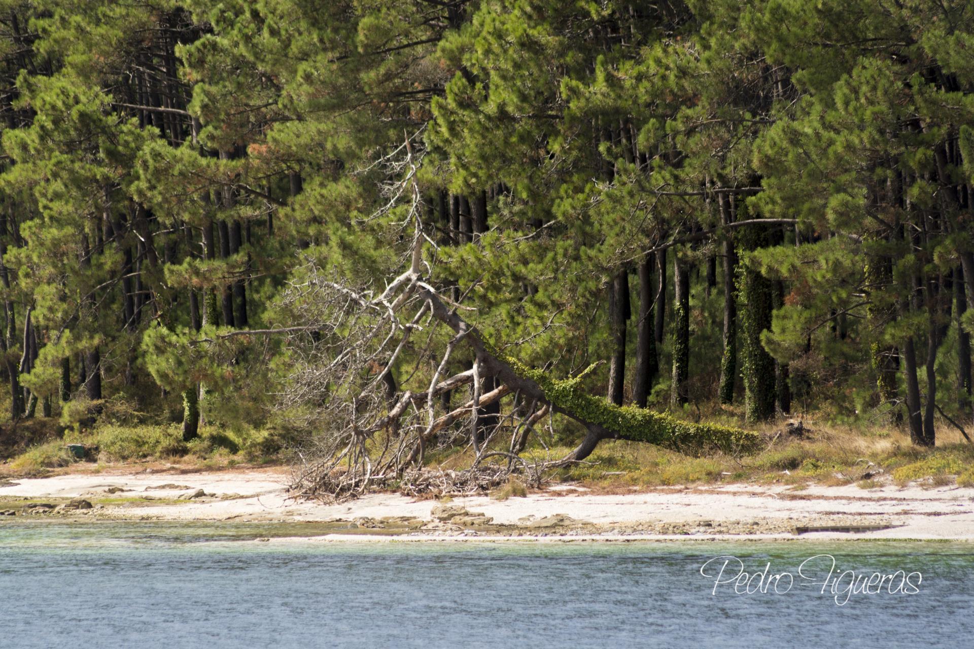 """Ampliada a oferta de rutas guiadas """"Descubrindo o Parque Nacional"""" en primavera"""