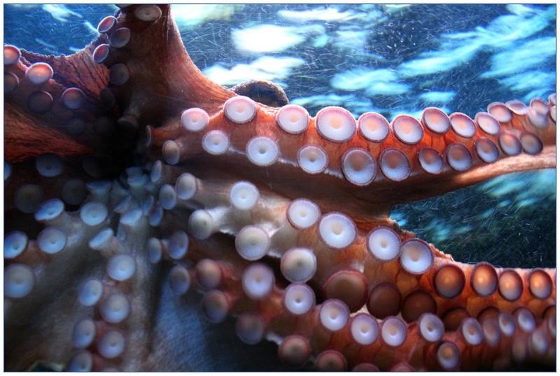 A USC participa nun proxecto europeo sobre a cadea de valor e o consumo responsable de cefalópodos