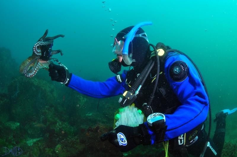 """Mergullando no illote de Viños en Cíes con """"Ecología Azul-Blue Ecology"""""""