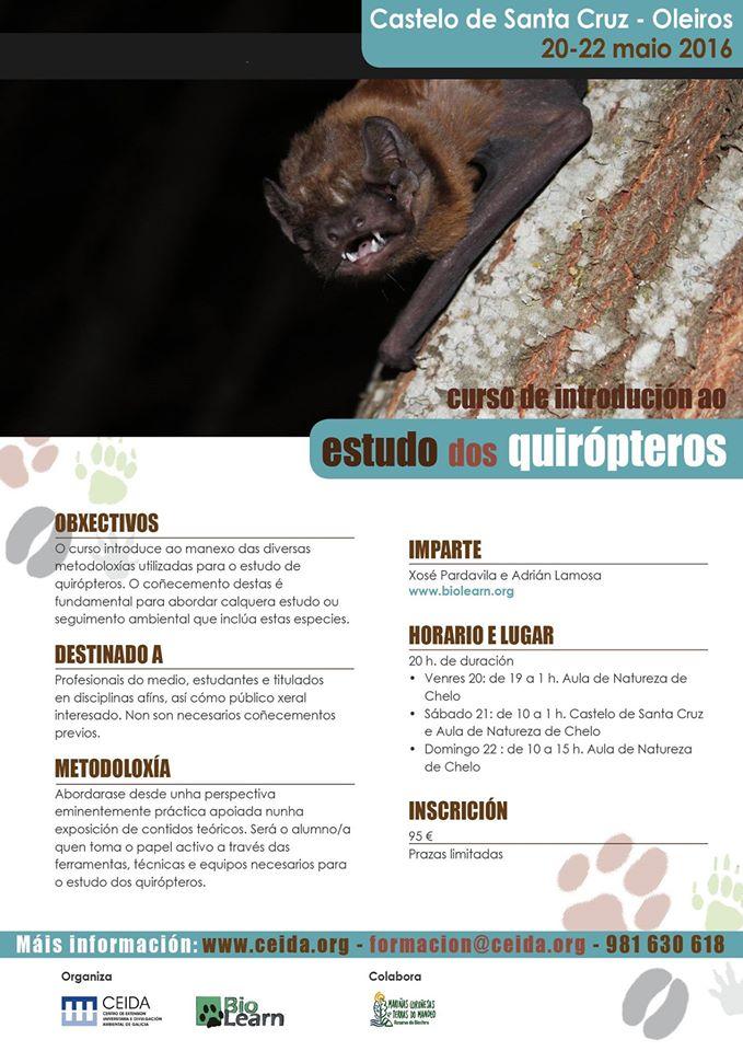 quirópteros-ceida