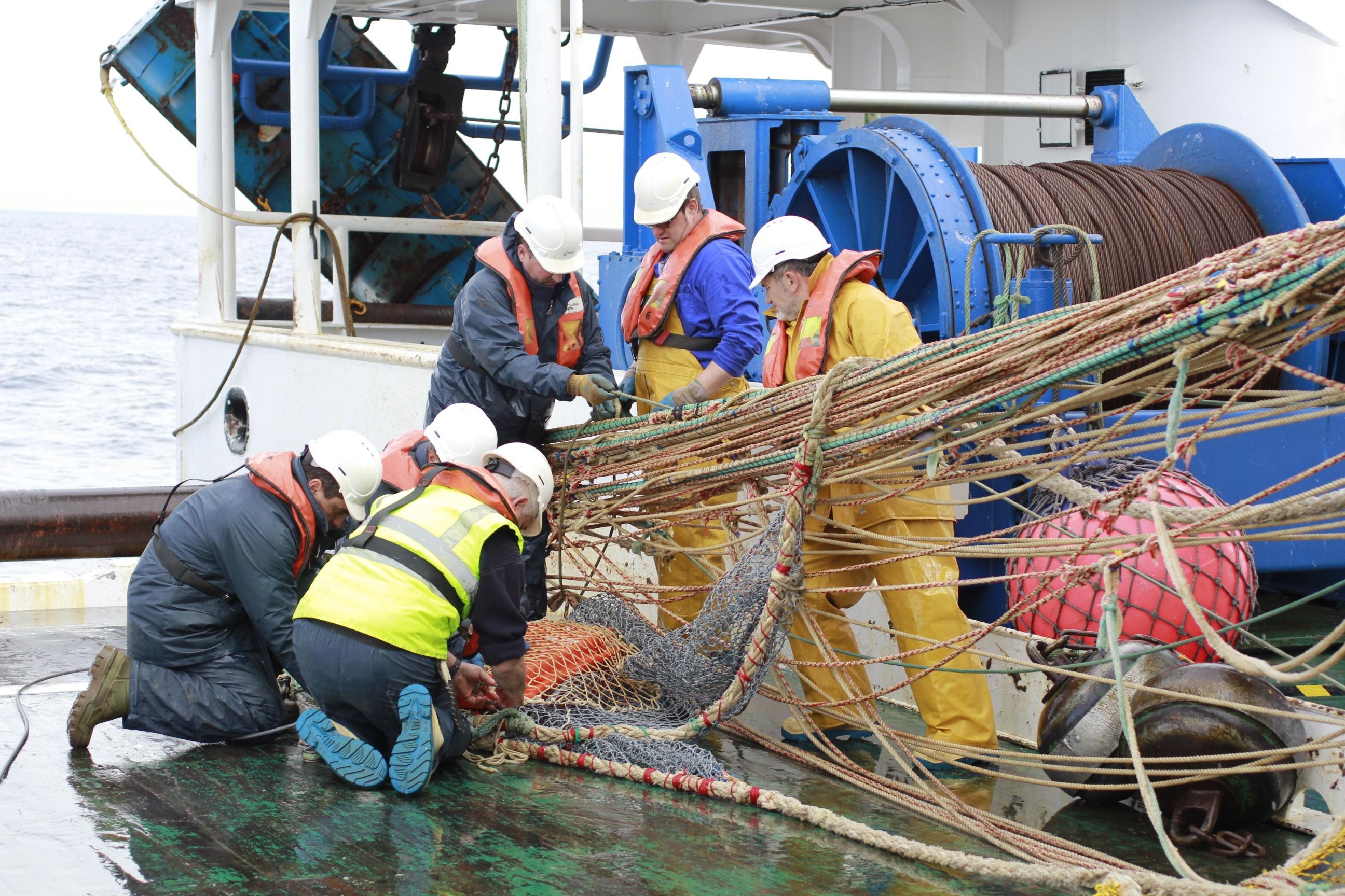 O IEO estudará a distribución e abundancia de sardiña en Galicia e golfo de Biscaia
